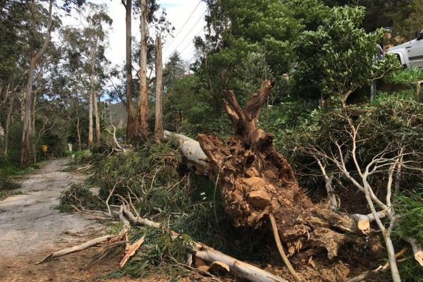 Climate Adaptation in the Yarra Ranges: Home Scale